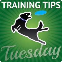 Training Tip Tuesday blog hop about dog training and behavior