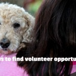 Find opportunities that involve working with animals