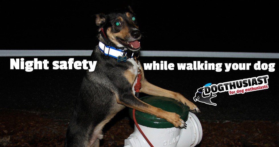 Reflective dog collars and reflective dog vests help you walk your dog safely at night.