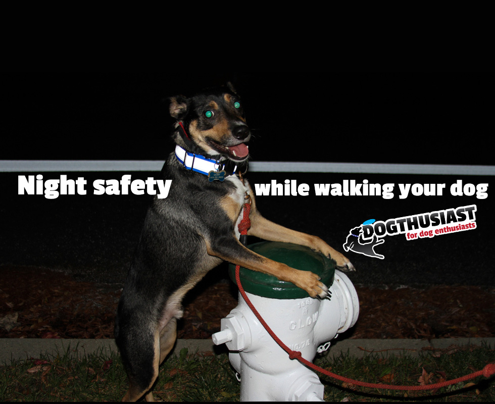 How to be safe when jogging or walking your dog at night: dog safety tips and products to help out