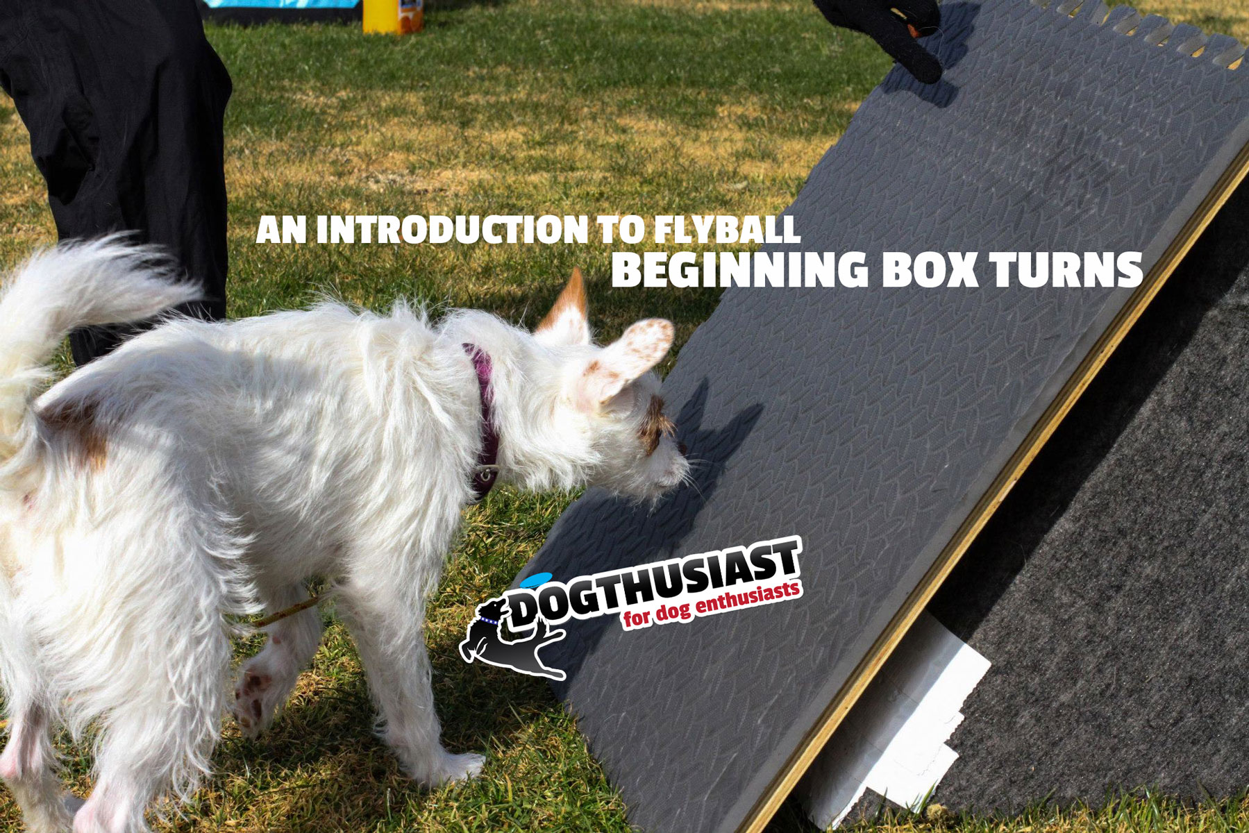 An Introduction to Flyball: Using a ramp to start learning box turns
