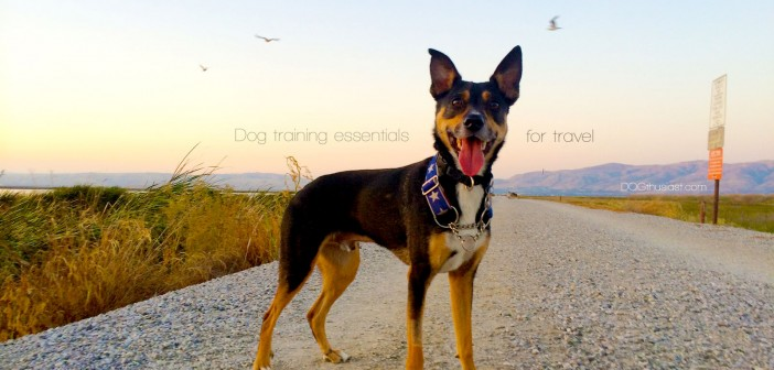 Dog training essentials for travel