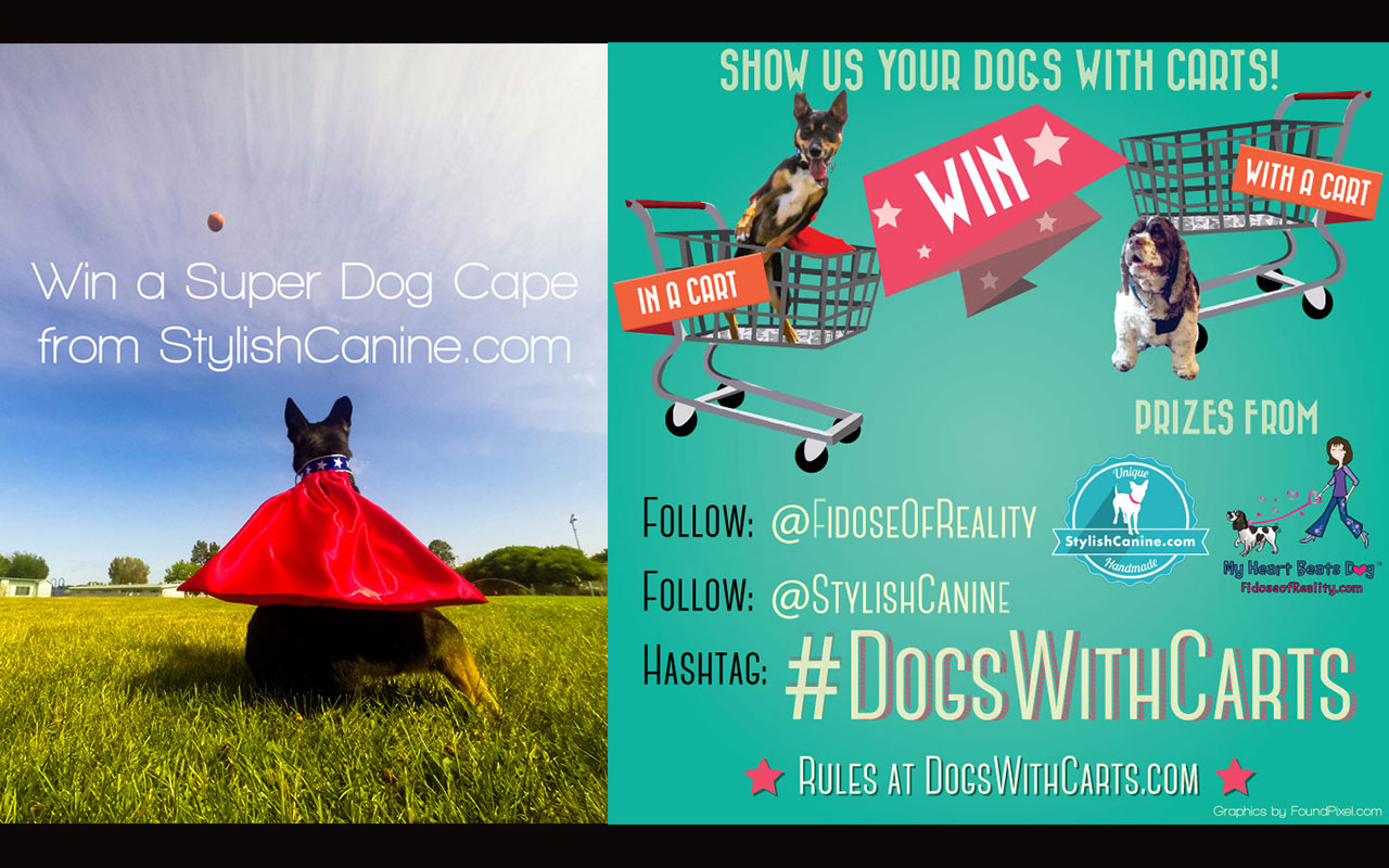 Photos of dogs in shopping carts contest! #DogsWithCarts
