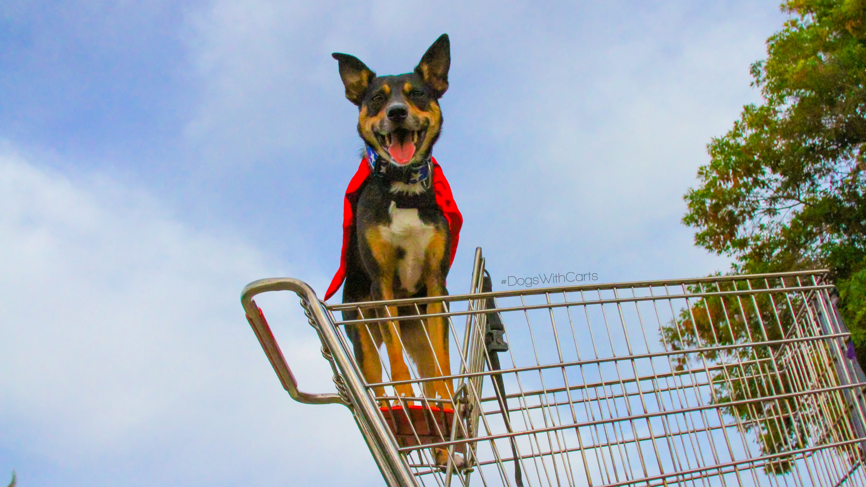 Super Dogs in Carts: #DogsWithCarts for Wordless Wednesday