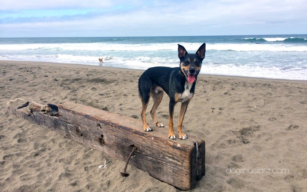 Dog balancing on a large piece of wood