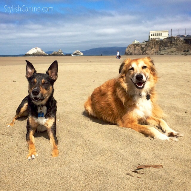 Two dogs happy on the beach