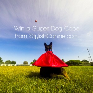 Win a Stylish Canine Super Dog Cape