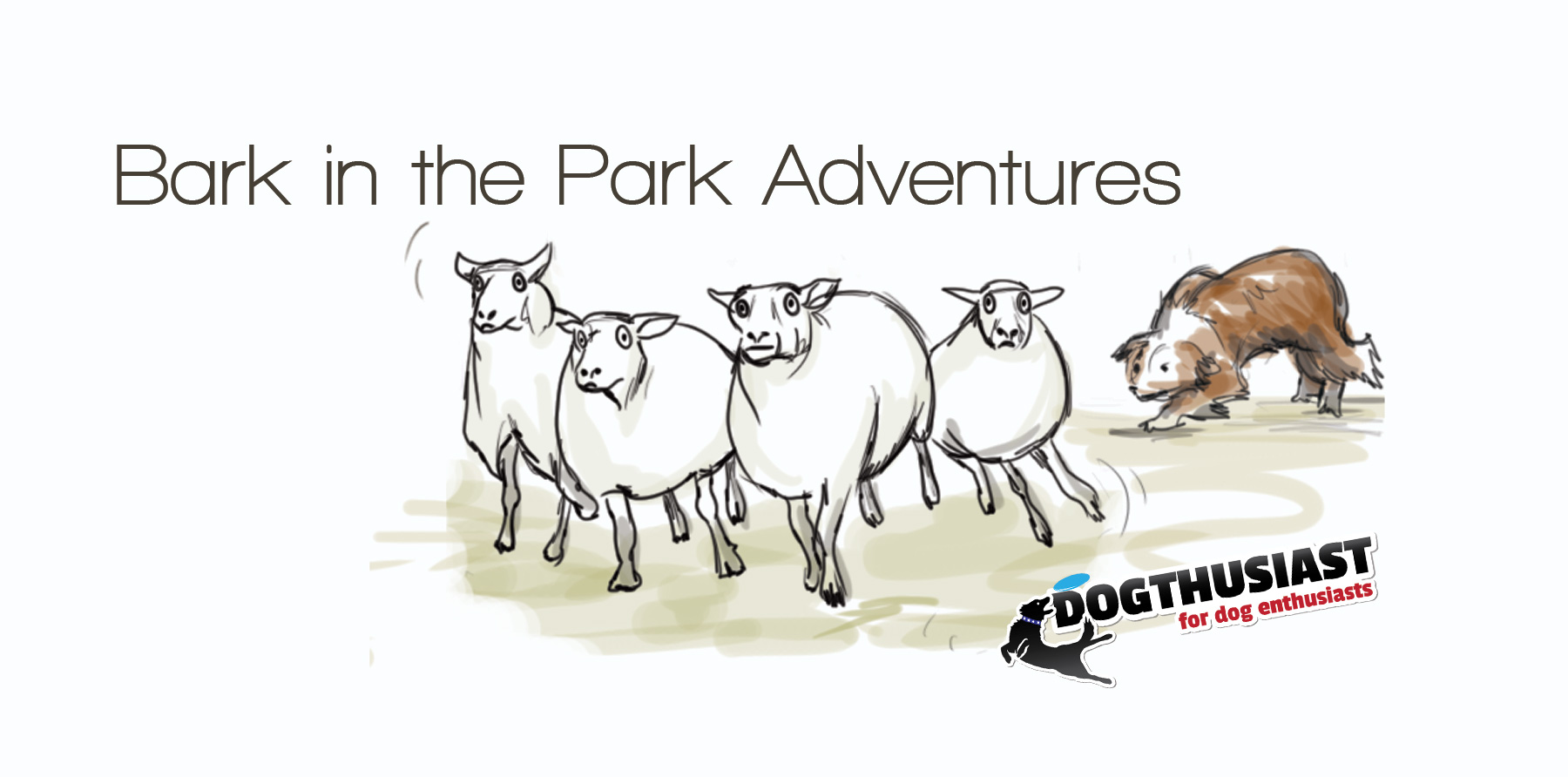 Bark in the Park adventures with sheep and one frustrated border collie #AdventureDogChat