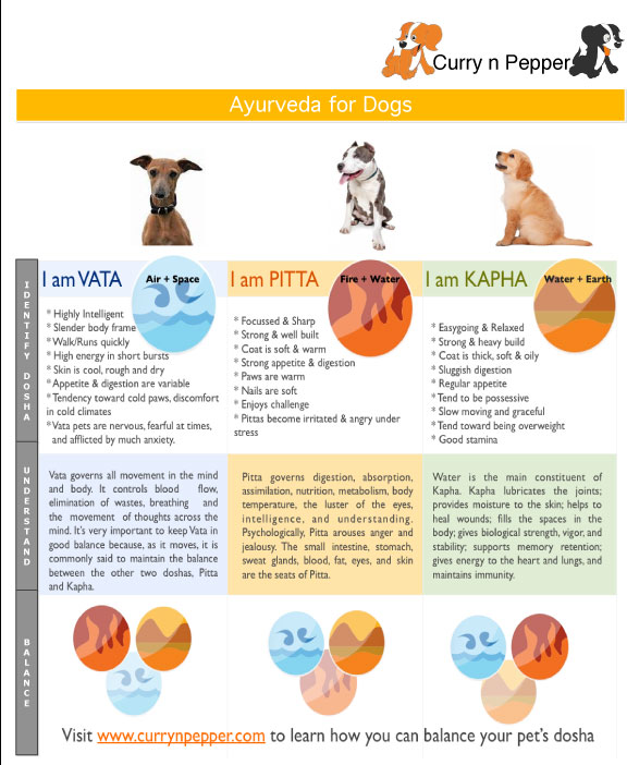 ayurveda for dogs explained