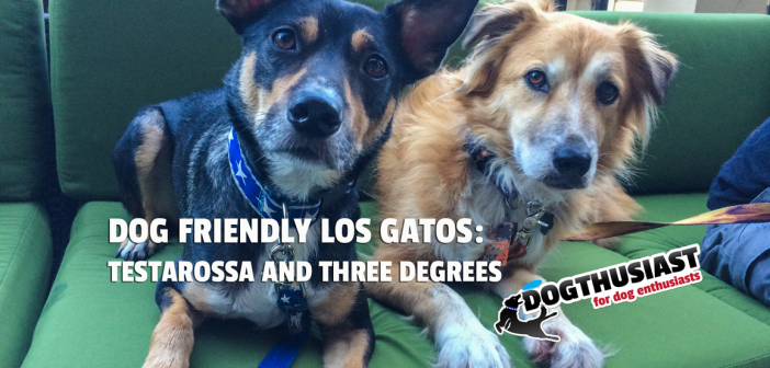 Dogs at Dog Friendly Los Gatos restaurants