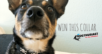 Win a dog collar from Stylish Canine