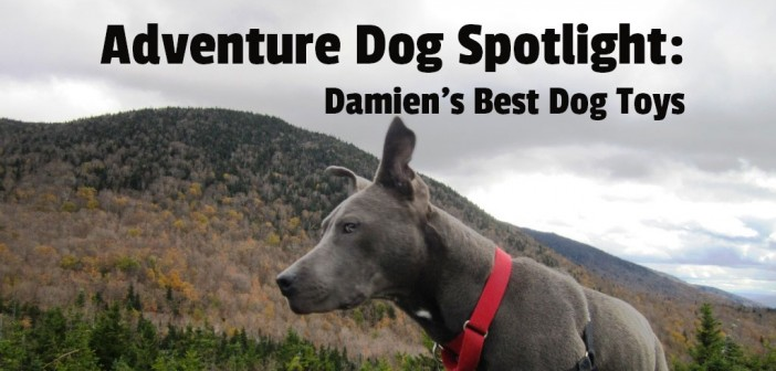 Adventure Dog spotlight