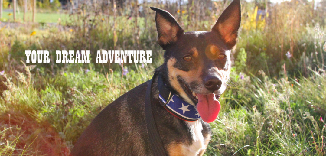 Your dream dog adventure