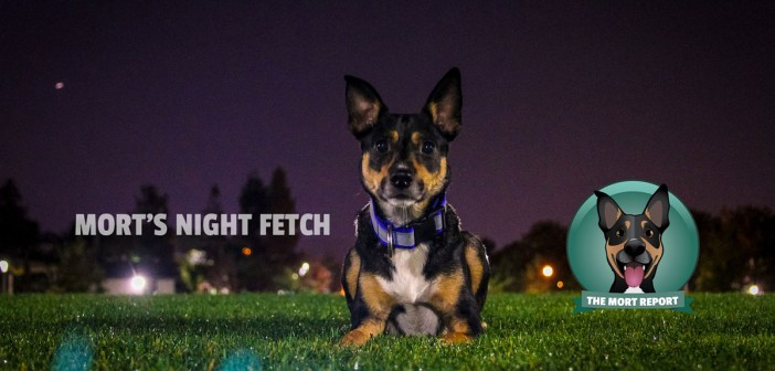 Night Fetch - The Mort Report