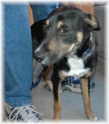 Mort at Merced County Animal Shelter