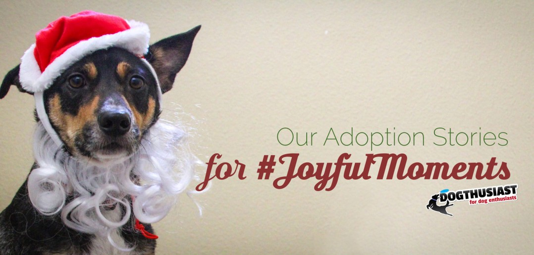 JoyfulMoments dog adoption stories