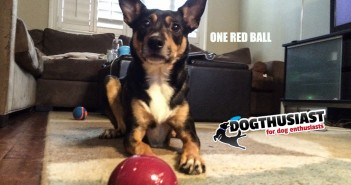 One read ball and dog love