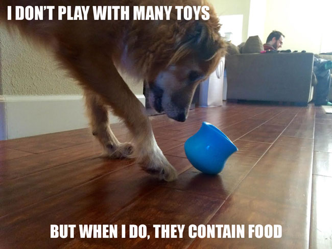 Toys should contain food