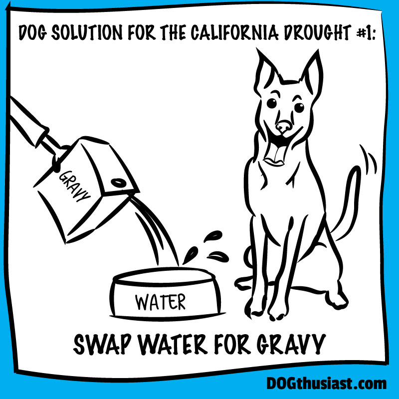 Dog Solutions for the California Drought