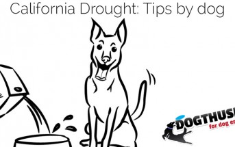 California Drought Tips by Dog