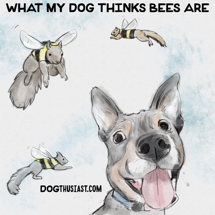 Squirrels and bees and a dog