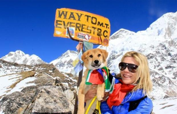 dog-climbs-everest