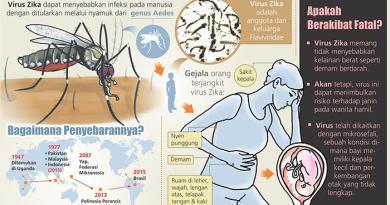 grafis-virus-zika