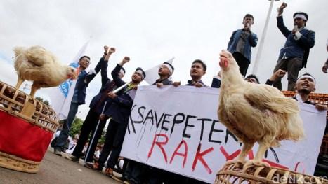 harga ayam anjlok peternak demo