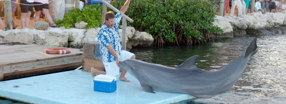 Career Opportunities at DRC - Dolphin Research Center