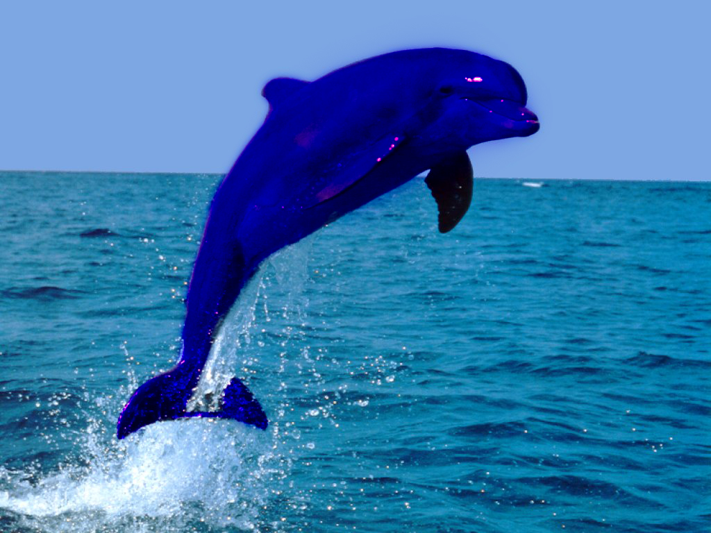 Cute Baby Full Hd Wallpaper Download Products The Dolphin Shop