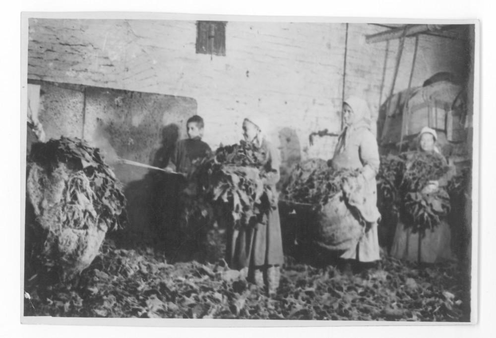 Склад листового табака на фабрике «Дукат». 1925 год. Архив ГЦМСИР. ГИК 37390/146