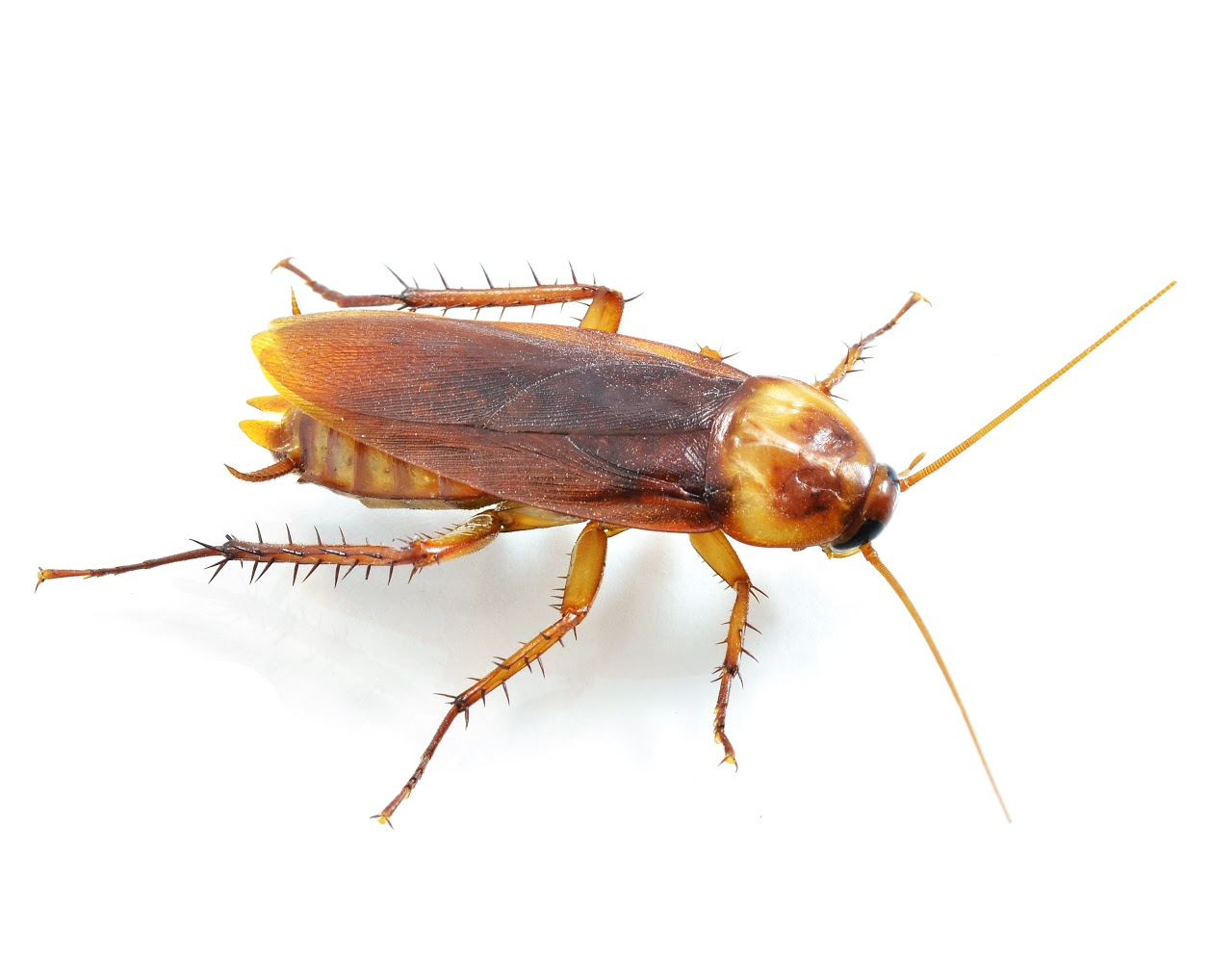 Do It Yourself Pest Control Tucson Oracle Pest Control Roach Spray Scorpion Extermination Tucson