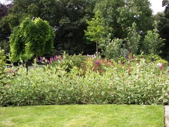 peter donegan landscaping ltd - informal hedge