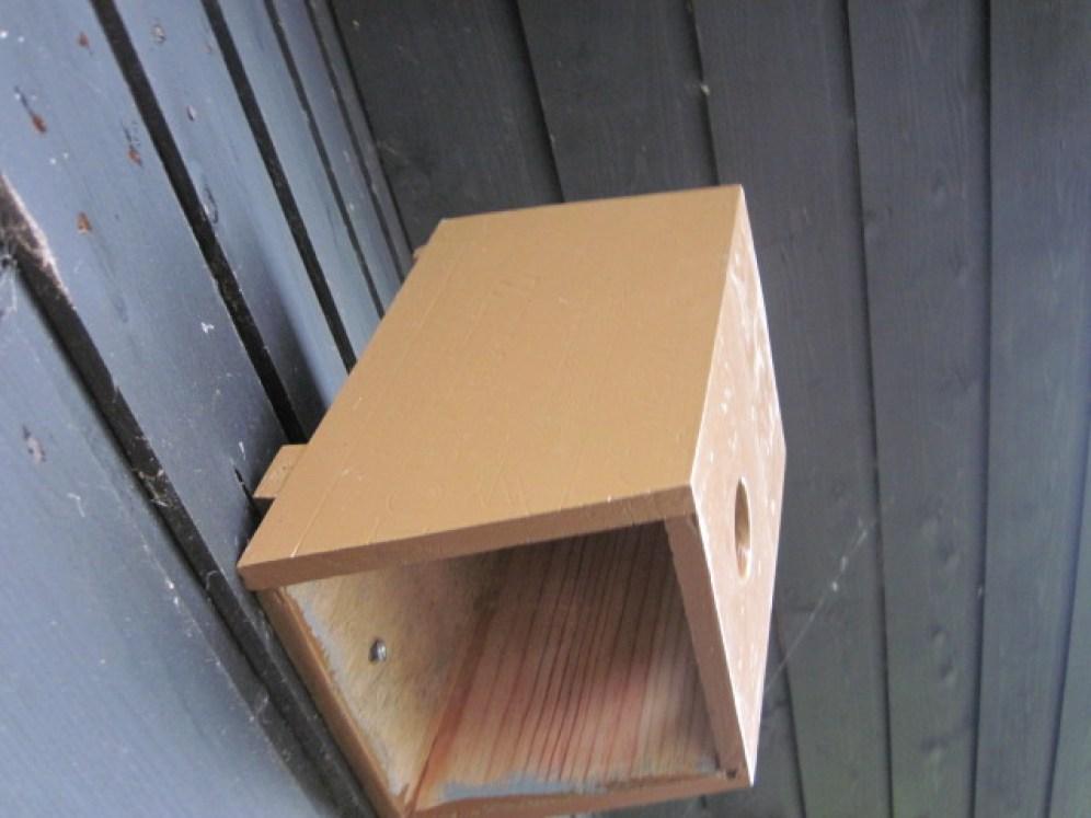 bird box (14)