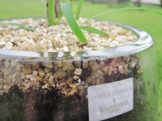 dublin plants planters