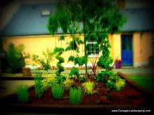 donegan, gardens dublin