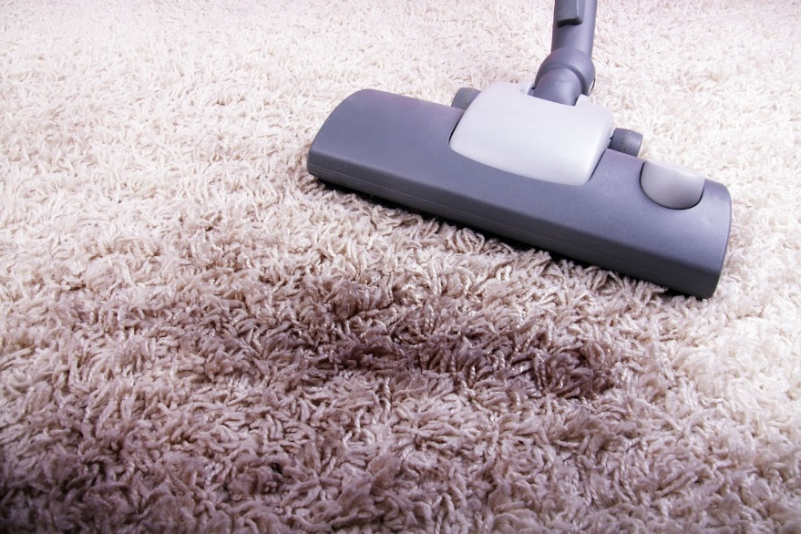 Pests And Your Carpet A Alert Exterminating Service Inc