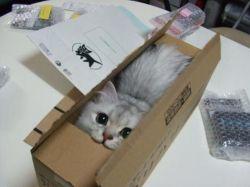 おもしろい猫の画像・写真-お届け物ですニャ