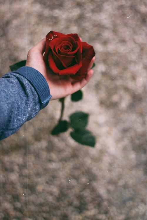 Red Rose Girl Wallpapers أجمل صور الورد إلى عاشقة الورد صديقتي الغالية
