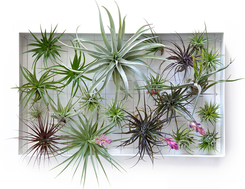 Intratuin Verticaal Tuinieren Airplantman Vertical Garden | Designs & Ideas On Dornob