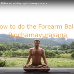 Forearm Balance – Pinchamayurasana