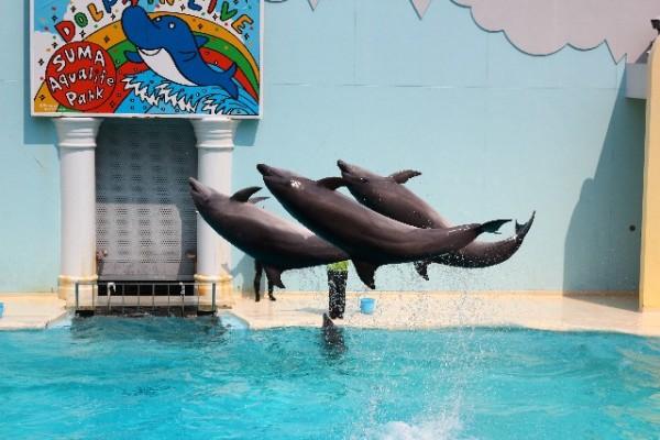 須磨水族館ではありません『須磨海浜水族園』