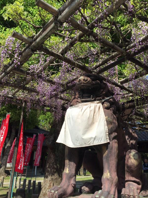 藤の名所 大阪福島『了徳院』『春日神社』