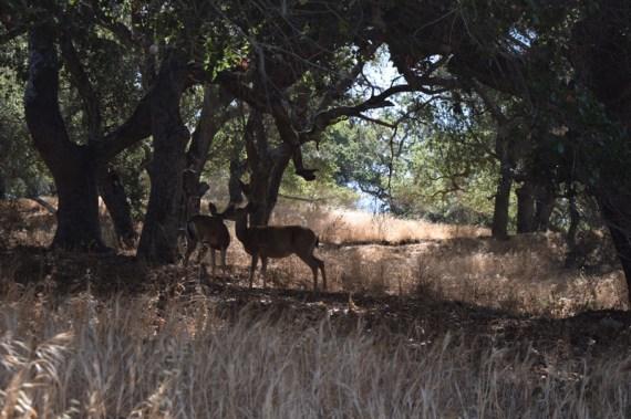 Deer_LopezLake