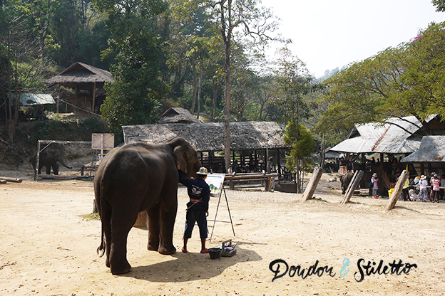 Mae Sa camp d'éléphants