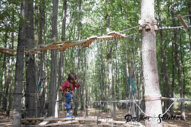 Saumur forest