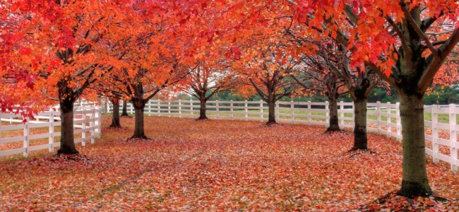 Red trees, LWPF, & a path