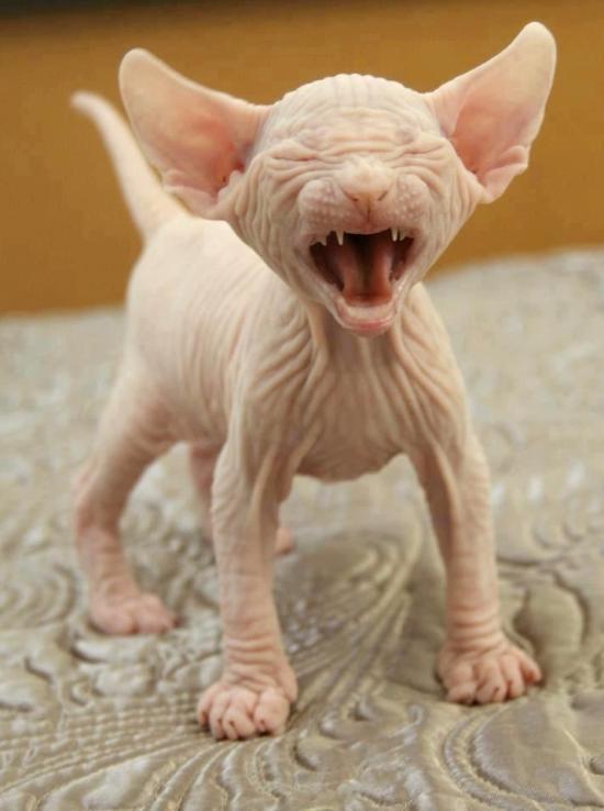 Anu 3d Name Wallpaper Ugly Dogs But Cute Really Wallpaper Downloadwallpaper Org