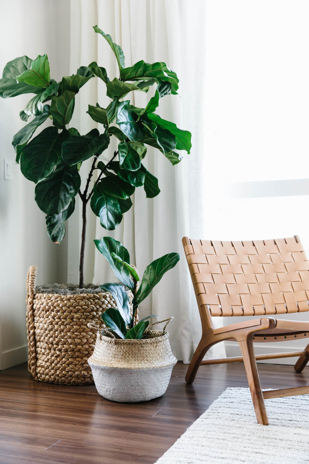 Big Plants For Living Room Designing My Modern And Minimalist Living Room With
