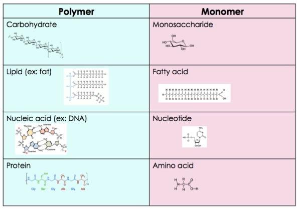 How Do Macromolecules Form? - Expii
